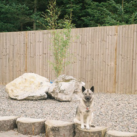Bamboo as an ornamental feature in gravel garden